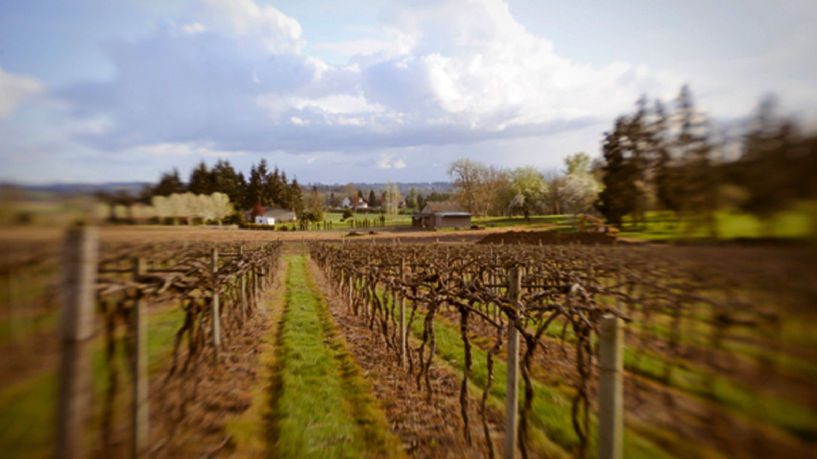 Photo credit: AlexEli Vineyard & Winery in Oregon. (Heidi Hoffman)